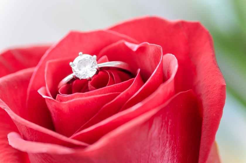 flower-rose-macro-nature-633857.jpeg